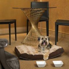 Отель Le Soleil by Executive Hotels Канада, Ванкувер - отзывы, цены и фото номеров - забронировать отель Le Soleil by Executive Hotels онлайн с домашними животными