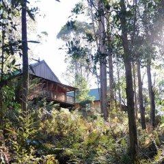 Отель Lemonthyme Wilderness Retreat фото 9