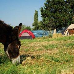Отель Teos Sanat Kampi с домашними животными