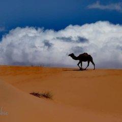 Отель Etoile Sahara Camp Марокко, Мерзуга - отзывы, цены и фото номеров - забронировать отель Etoile Sahara Camp онлайн фото 3