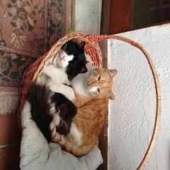 Отель B&B Falcone Кастровиллари с домашними животными