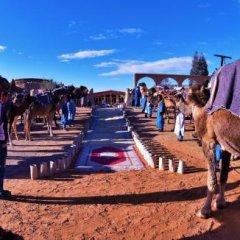 Отель Palmeras Y Dunas Марокко, Мерзуга - отзывы, цены и фото номеров - забронировать отель Palmeras Y Dunas онлайн фото 5