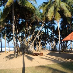 Hibiscus Beach Hotel & Villas пляж фото 2
