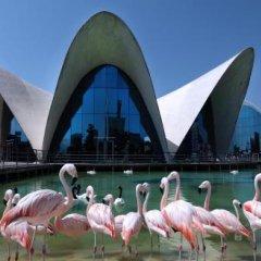Отель Sorolla Centro Испания, Валенсия - отзывы, цены и фото номеров - забронировать отель Sorolla Centro онлайн приотельная территория