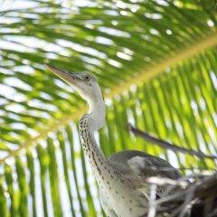 Отель Banyan Tree Vabbinfaru Мальдивы, Остров Гасфинолу - отзывы, цены и фото номеров - забронировать отель Banyan Tree Vabbinfaru онлайн балкон