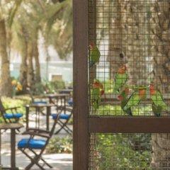 Отель Coral Beach Resort - Sharjah ОАЭ, Шарджа - 8 отзывов об отеле, цены и фото номеров - забронировать отель Coral Beach Resort - Sharjah онлайн балкон