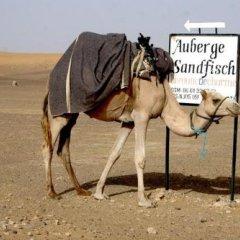 Отель Sandfish Марокко, Мерзуга - отзывы, цены и фото номеров - забронировать отель Sandfish онлайн с домашними животными