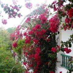 Shalimar Hammamet in Hammamet, Tunisia from 79$, photos, reviews - zenhotels.com