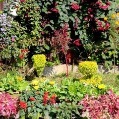 Отель Orchid Непал, Покхара - отзывы, цены и фото номеров - забронировать отель Orchid онлайн фото 11