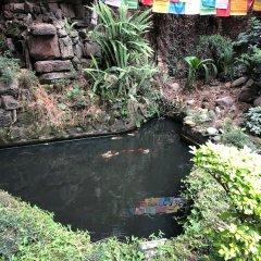 Отель Nirvana Garden Hotel Непал, Катманду - отзывы, цены и фото номеров - забронировать отель Nirvana Garden Hotel онлайн фото 9