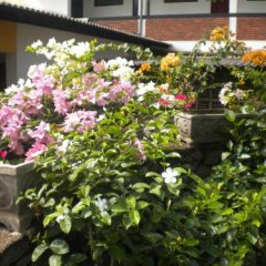 Отель A-Prima Hotel Шри-Ланка, Калутара - отзывы, цены и фото номеров - забронировать отель A-Prima Hotel онлайн фото 8