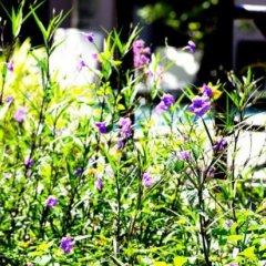 Отель Hoi An Garden Villas фото 9