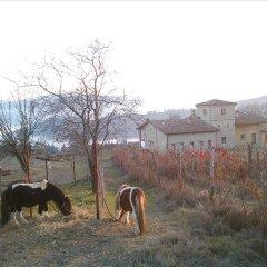 Отель Agriturismo Il Filare Невьяно-дельи-Ардуини фото 3