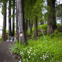 Отель Lake Quinault Lodge Куинолт фото 8
