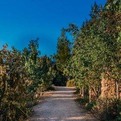 Отель Tur Sinai Organic Farm Resort Иерусалим приотельная территория