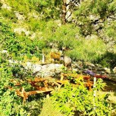 Гостевой Дом Dionysos Lodge фото 11