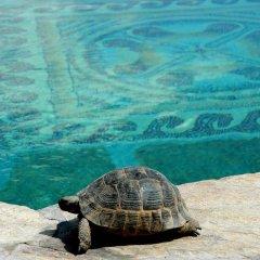 Museum Hotel Турция, Учисар - отзывы, цены и фото номеров - забронировать отель Museum Hotel онлайн пляж