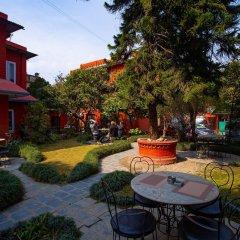 Отель Blue Horizon Непал, Катманду - отзывы, цены и фото номеров - забронировать отель Blue Horizon онлайн фото 9
