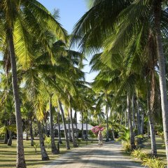Отель Musket Cove Island Resort & Marina фото 9