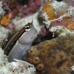 Отель Banyan Tree Vabbinfaru Мальдивы, Остров Гасфинолу - отзывы, цены и фото номеров - забронировать отель Banyan Tree Vabbinfaru онлайн питание фото 2