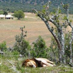 Отель Gorah Elephant Camp Южная Африка, Аддо - отзывы, цены и фото номеров - забронировать отель Gorah Elephant Camp онлайн приотельная территория фото 2