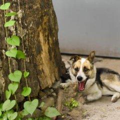 Almaty Hostel Dom Алматы с домашними животными