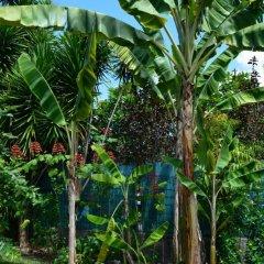 Отель Maison Te Vini Holiday home 3 Французская Полинезия, Пунаауиа - отзывы, цены и фото номеров - забронировать отель Maison Te Vini Holiday home 3 онлайн фото 5