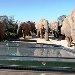 Отель Gorah Elephant Camp Южная Африка, Аддо - отзывы, цены и фото номеров - забронировать отель Gorah Elephant Camp онлайн приотельная территория