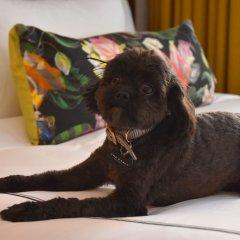 The Darcy Hotel с домашними животными