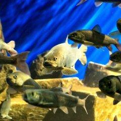 Гостиница Usadba 50 в Иркутске отзывы, цены и фото номеров - забронировать гостиницу Usadba 50 онлайн Иркутск бассейн