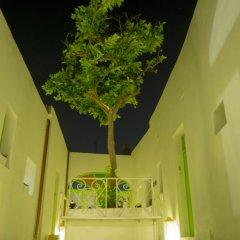 Отель Lemon Tree Bed & Breakfast интерьер отеля