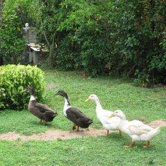 Отель Kosgoda Beach Resort с домашними животными