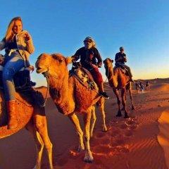 Отель Camel Bivouac Merzouga Марокко, Мерзуга - отзывы, цены и фото номеров - забронировать отель Camel Bivouac Merzouga онлайн приотельная территория