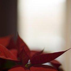 Гостиница Илиан Хостел в Москве - забронировать гостиницу Илиан Хостел, цены и фото номеров Москва интерьер отеля фото 2