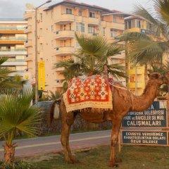 Semt Luna Beach Hotel - All Inclusive 2* Стандартный номер разные типы кроватей