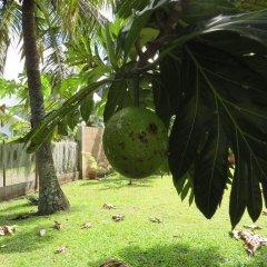 Отель Taharuu Surf Lodge Французская Полинезия, Папеэте - отзывы, цены и фото номеров - забронировать отель Taharuu Surf Lodge онлайн фото 11