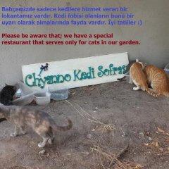 Chiyanno's Inn Турция, Тевфикие - отзывы, цены и фото номеров - забронировать отель Chiyanno's Inn онлайн с домашними животными