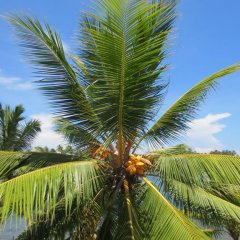 Отель FEEL Villa Шри-Ланка, Калутара - отзывы, цены и фото номеров - забронировать отель FEEL Villa онлайн пляж фото 2