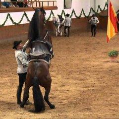 Отель La Albarizuela Испания, Херес-де-ла-Фронтера - отзывы, цены и фото номеров - забронировать отель La Albarizuela онлайн с домашними животными