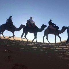 Отель Desert Camel Camp Марокко, Мерзуга - отзывы, цены и фото номеров - забронировать отель Desert Camel Camp онлайн фитнесс-зал