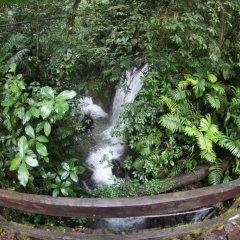 Отель Chachagua Rainforest Ecolodge фото 25