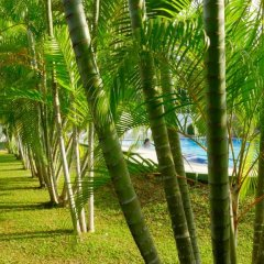 Отель Sagarika Beach Hotel Шри-Ланка, Берувела - отзывы, цены и фото номеров - забронировать отель Sagarika Beach Hotel онлайн фото 6