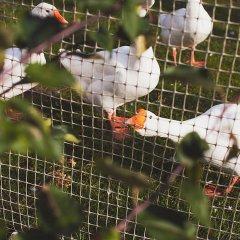 Гостиница Villa Vitele с домашними животными