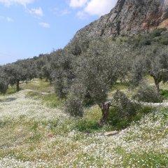 Natureland Efes 3* Стандартный номер с различными типами кроватей фото 35