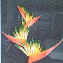 Отель Gecko Lodge Fiji Савусаву фото 8