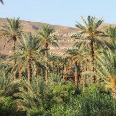 Отель Ecolodge Bab El Oued Maroc Oasis фото 6