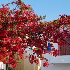 Отель Saronis Hotel Греция, Агистри - отзывы, цены и фото номеров - забронировать отель Saronis Hotel онлайн фото 7