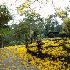 Отель Chachagua Rainforest Ecolodge фото 9