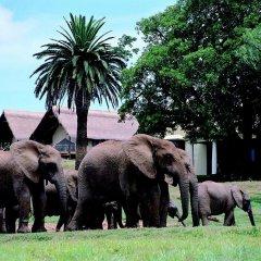 Отель Gorah Elephant Camp фото 2
