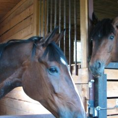 Гостиница Happy Horse с домашними животными